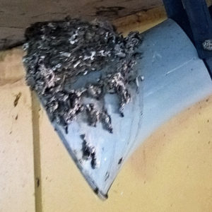Pigeon Pest Control | Pre-inspection shows many issues